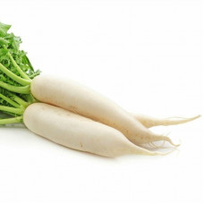 DAIKON RADISH CHINA WINNER