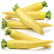 DAIKON RADISH GOLDEN CANNON