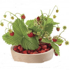 ALPINE STRAWBERRY BOWLENZAUBER